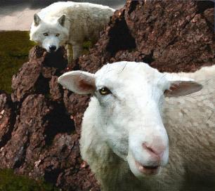 wolf-and-sheep-kerry-gavin